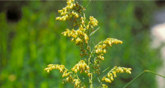花粉症を引き起こす植物の種類とは?~スギ花粉・ヒノキ花粉
