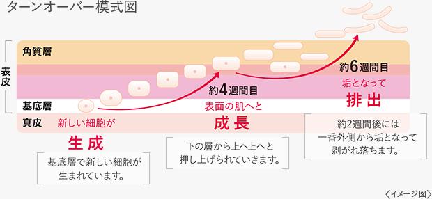 ターンオ-バー 模式図